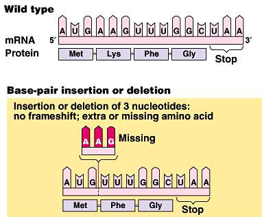 17.6: Point Mutations