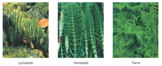 351 Plant Biology